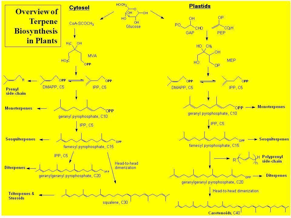 6. Terpenes: C5 to C20 (Dayrit)