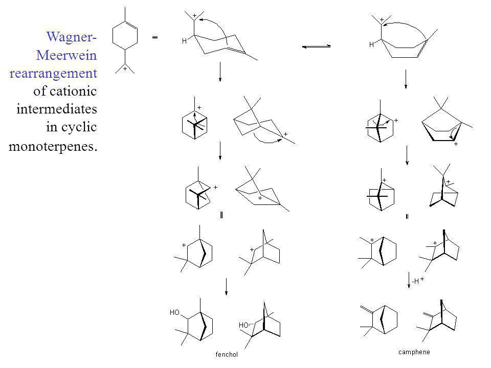 Wagner-Meerwein rearrangement of cationic intermediates in cyclic monoterpenes.