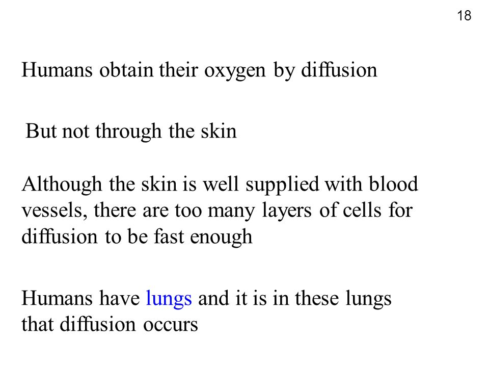Humans obtain their oxygen by diffusion