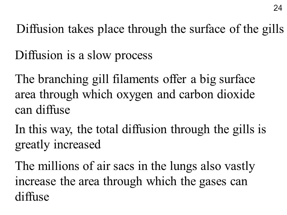 Diffusion takes place through the surface of the gills