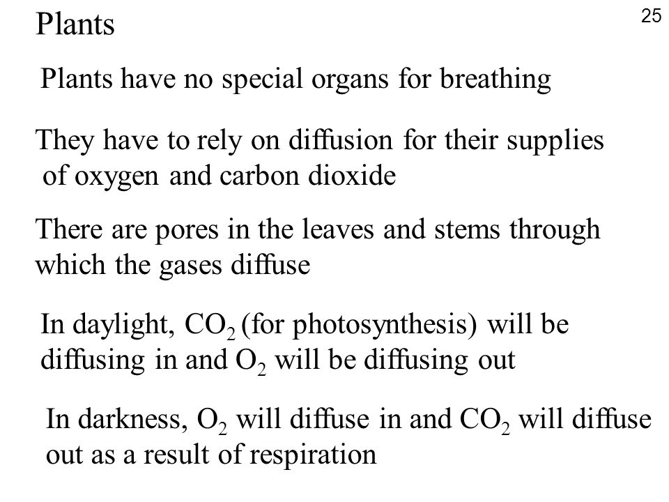 Plants Plants have no special organs for breathing