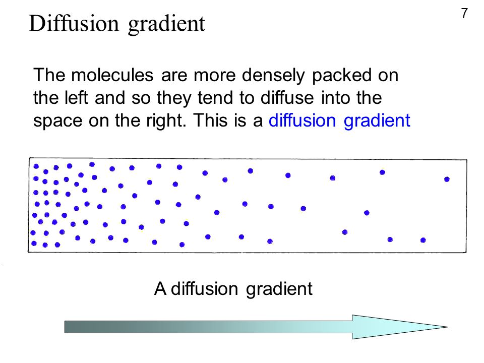 Diffusion gradient The molecules are more densely packed on