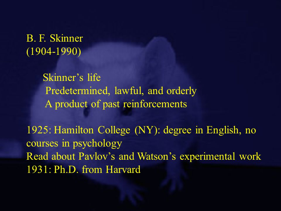B. F. Skinner ( ) Skinner's life. Predetermined, lawful, and orderly. A product of past reinforcements.