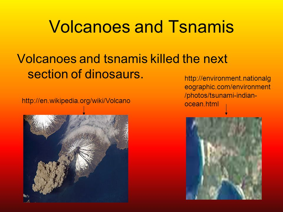 Volcanoes and Tsnamis Volcanoes and tsnamis killed the next section of dinosaurs.