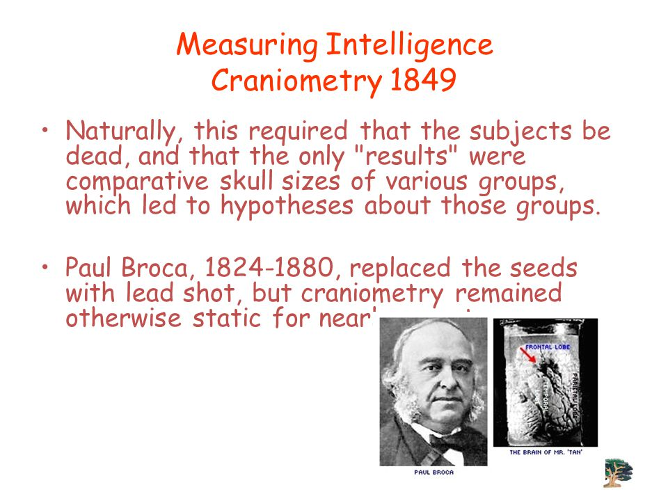 Measuring Intelligence Craniometry 1849