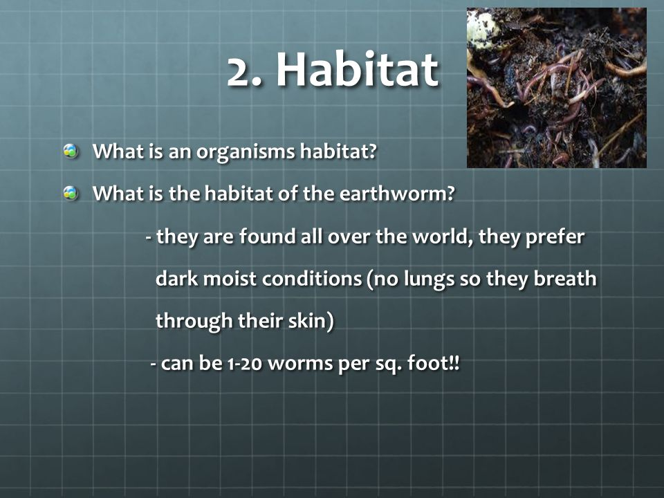 2. Habitat What is an organisms habitat