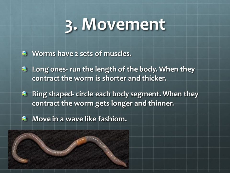 3. Movement Worms have 2 sets of muscles.