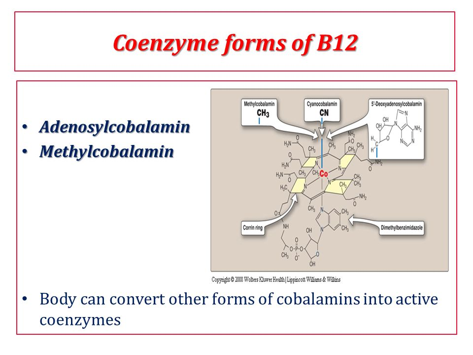 Coenzyme forms of B12 Adenosylcobalamin Methylcobalamin