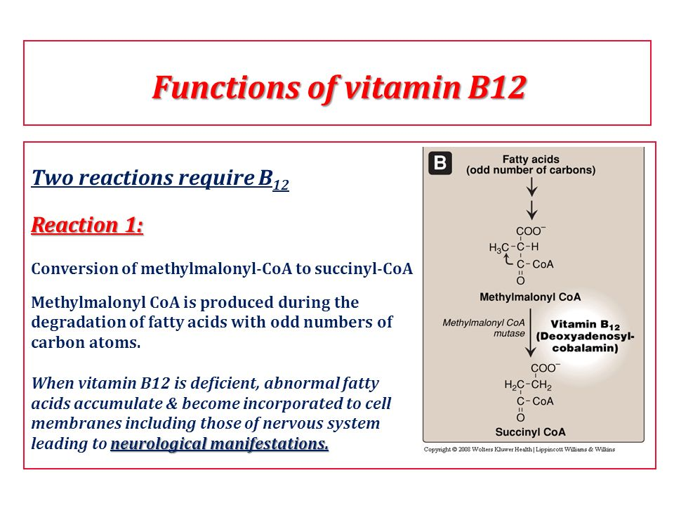 Functions of vitamin B12 Two reactions require B12 Reaction 1:
