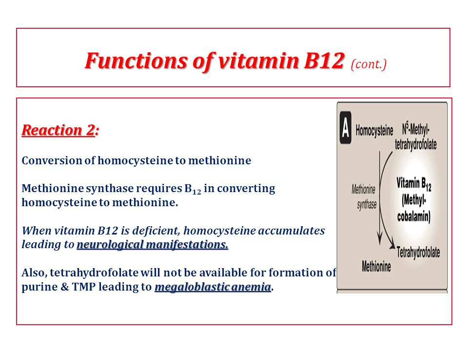 Functions of vitamin B12 (cont.)