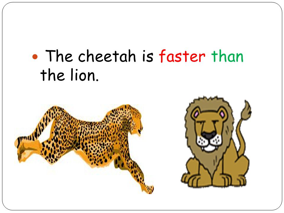 The cheetah is faster than the lion.