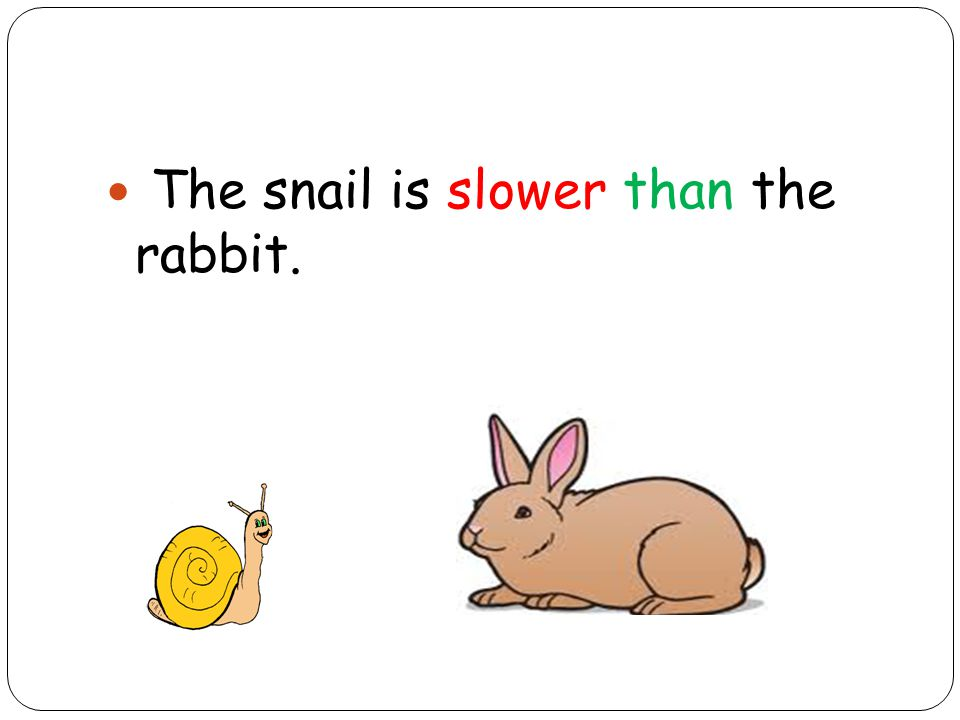 The snail is slower than the rabbit.
