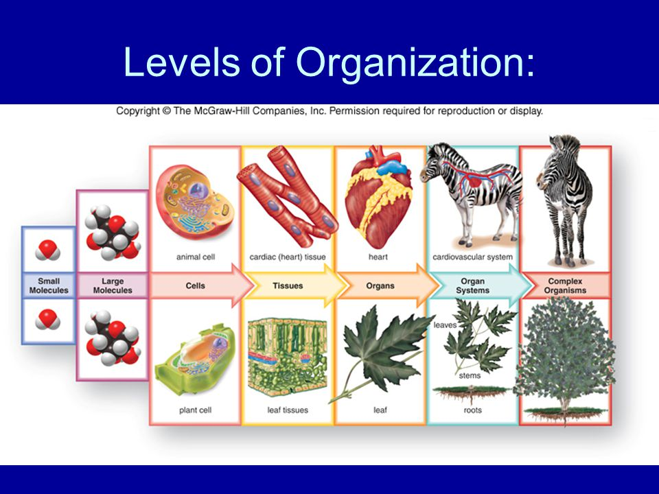 Levels of Organization: