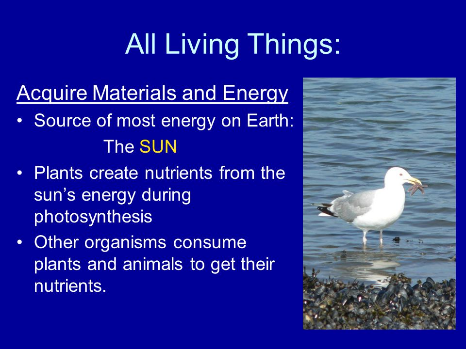 All Living Things: Acquire Materials and Energy