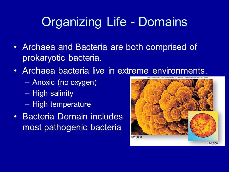 Organizing Life - Domains