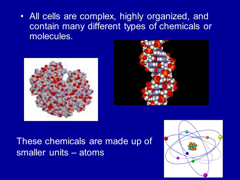 All cells are complex, highly organized, and contain many different types of chemicals or molecules.