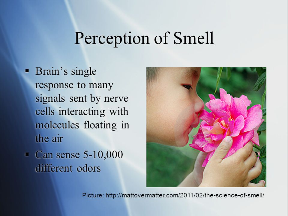 Perception of Smell Brain's single response to many signals sent by nerve cells interacting with molecules floating in the air.