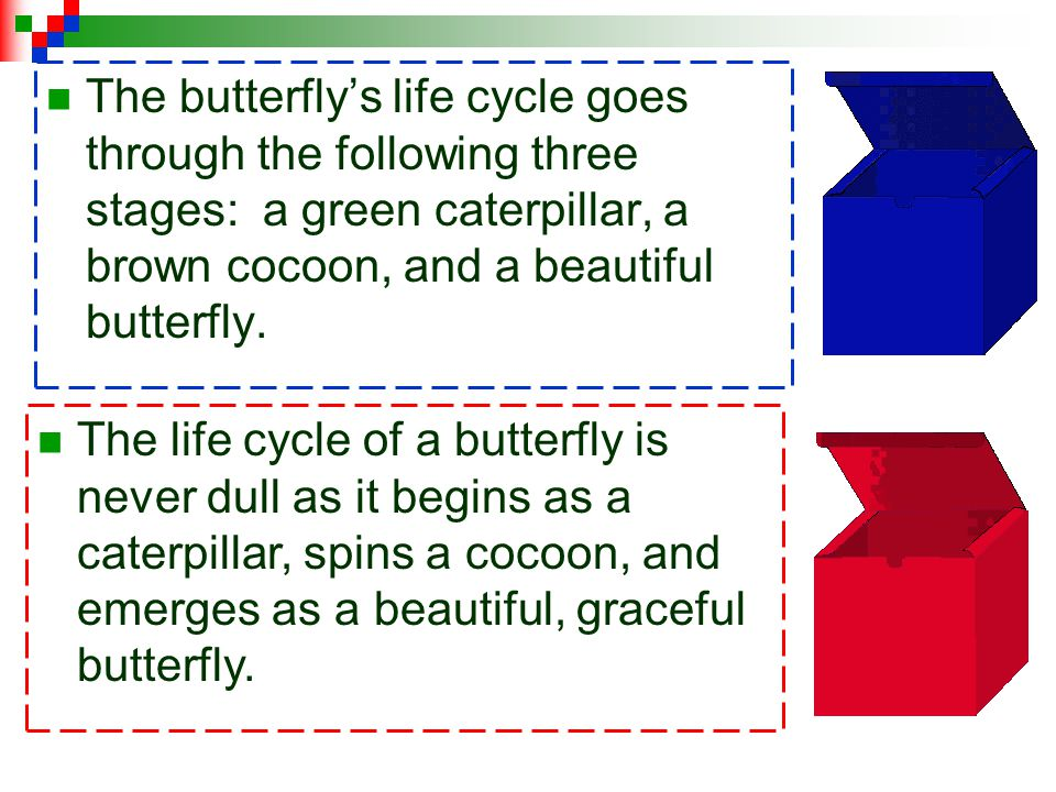 The butterfly's life cycle goes through the following three stages: a green caterpillar, a brown cocoon, and a beautiful butterfly.