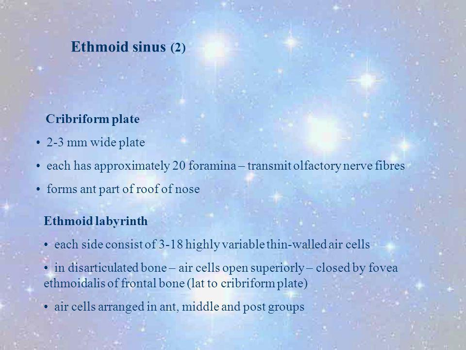Ethmoid sinus (2) Cribriform plate 2-3 mm wide plate