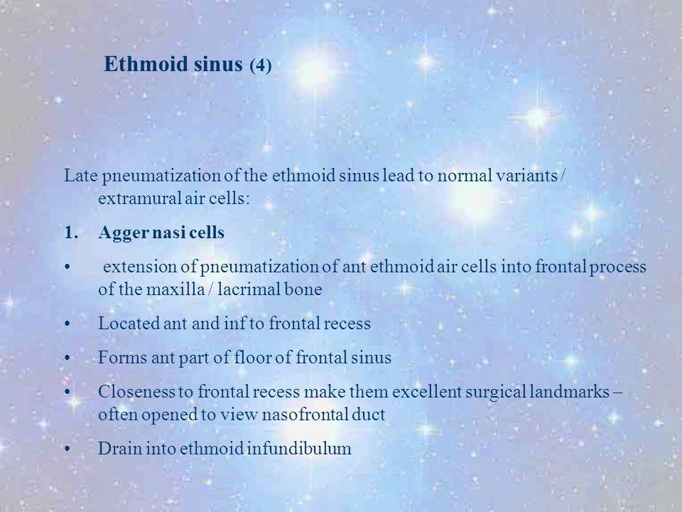 Ethmoid sinus (4) Late pneumatization of the ethmoid sinus lead to normal variants / extramural air cells: