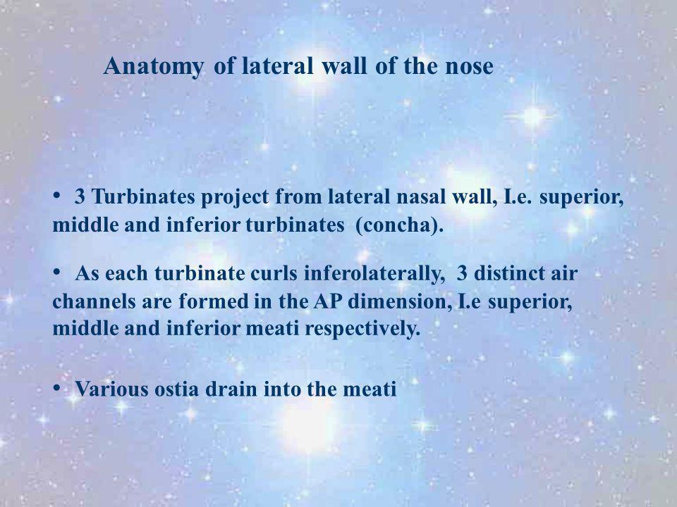 Anatomy of lateral wall of the nose