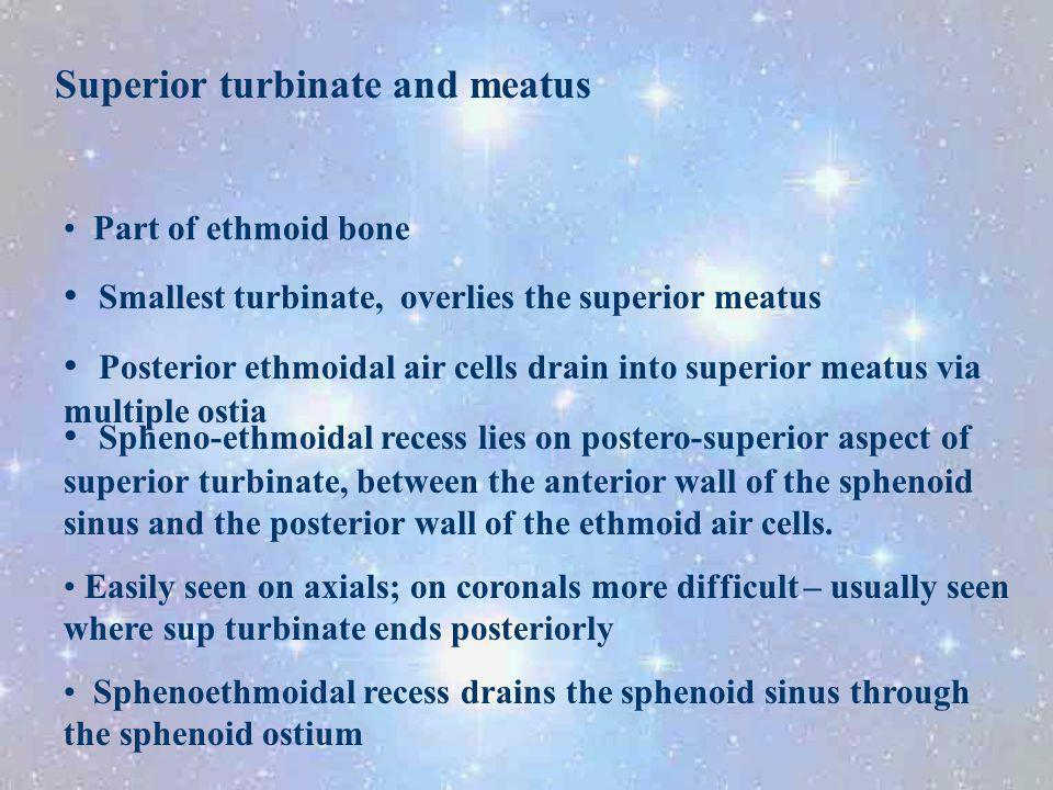 Superior turbinate and meatus