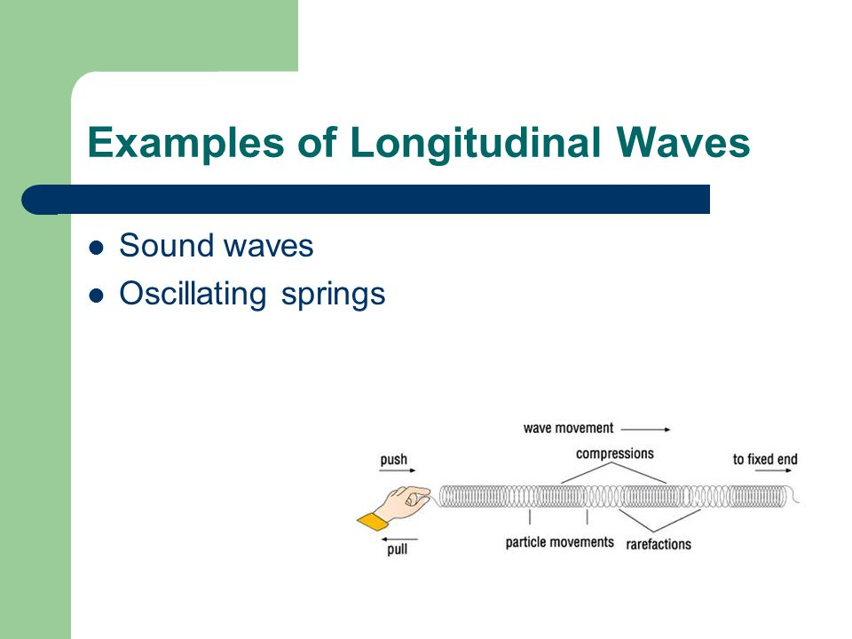 Examples of Longitudinal Waves
