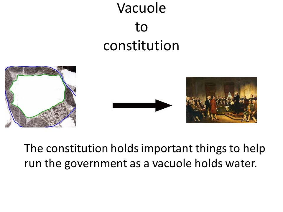 Vacuole to constitution