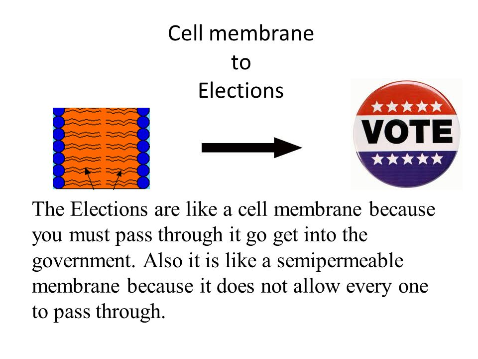 Cell membrane to Elections