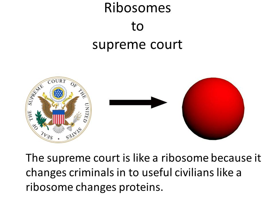 Ribosomes to supreme court