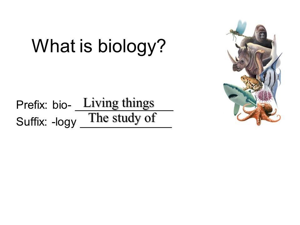 What is biology Living things The study of