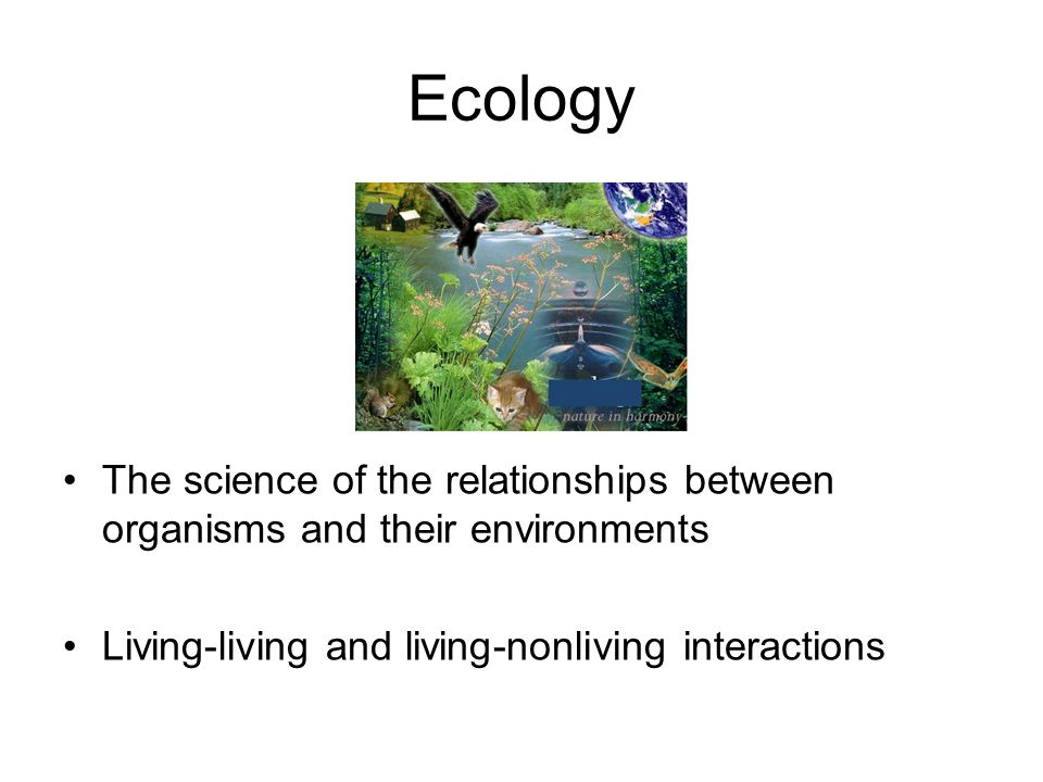 Ecology The science of the relationships between organisms and their environments.