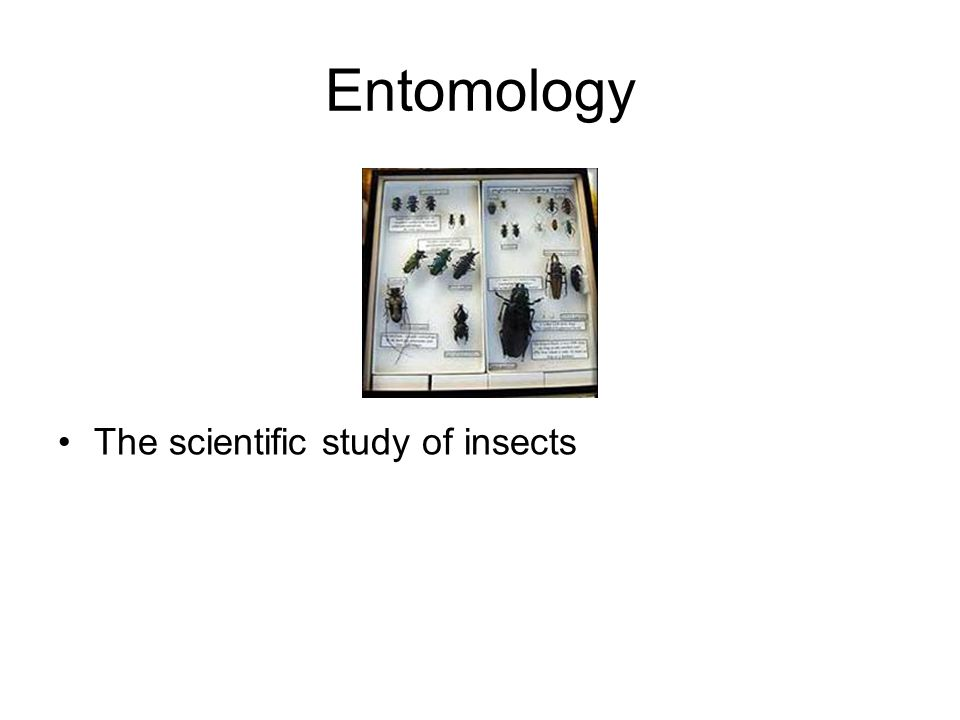 Entomology The scientific study of insects