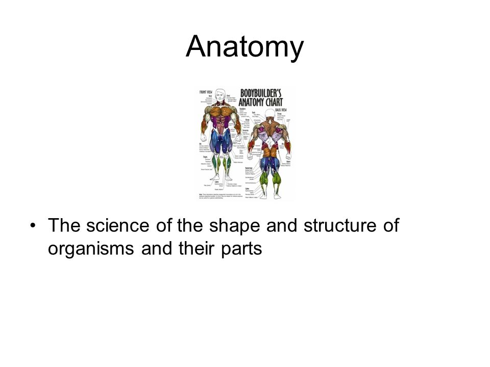 Anatomy The science of the shape and structure of organisms and their parts