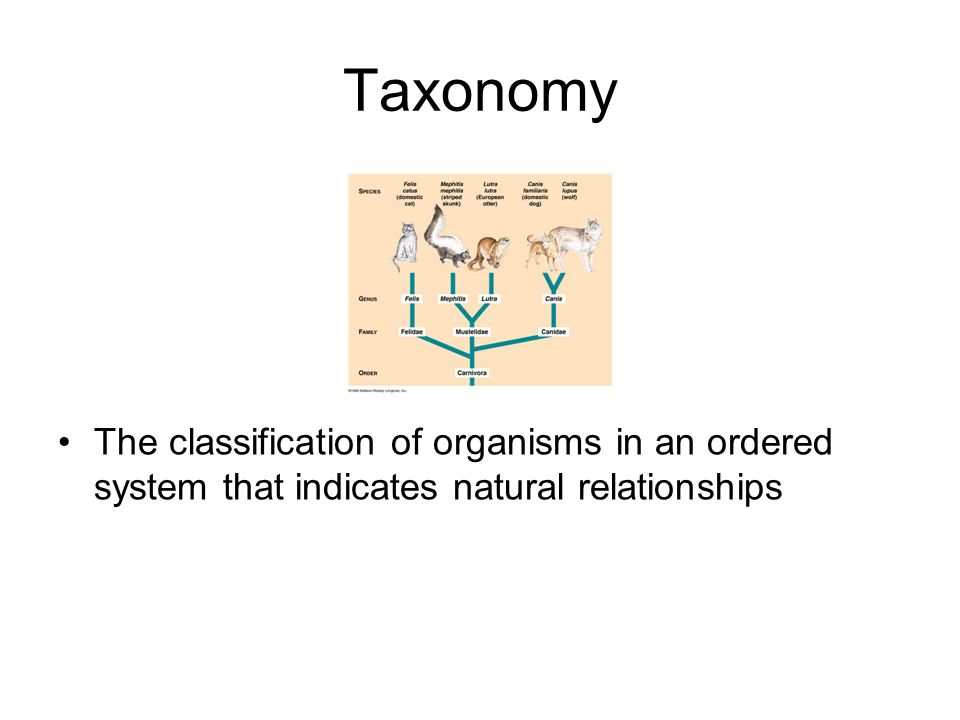 Taxonomy The classification of organisms in an ordered system that indicates natural relationships