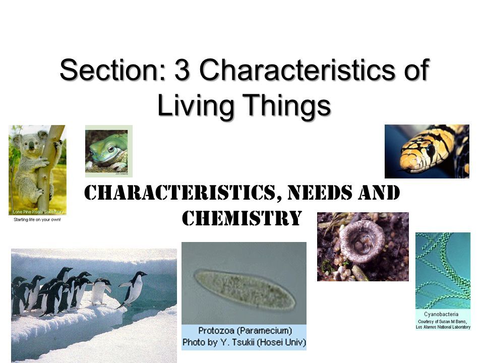 Characteristics, Needs and Chemistry