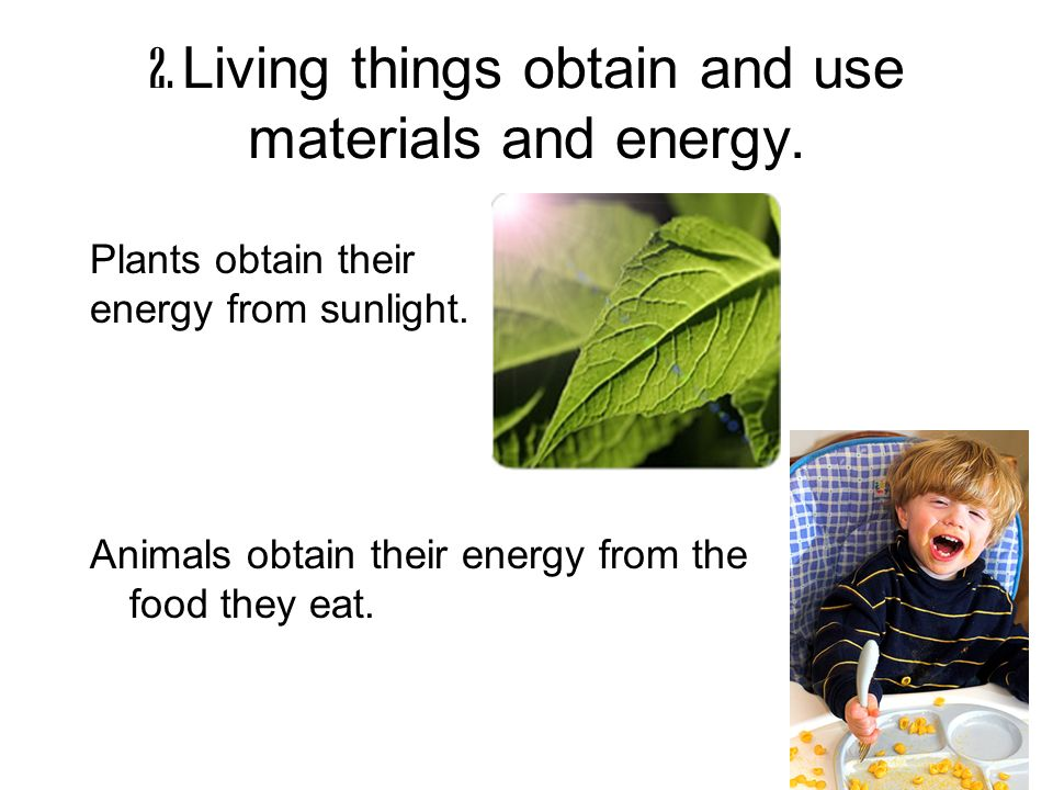 2. Living things obtain and use materials and energy.