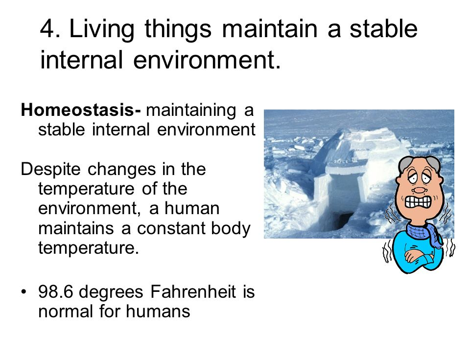 4. Living things maintain a stable internal environment.