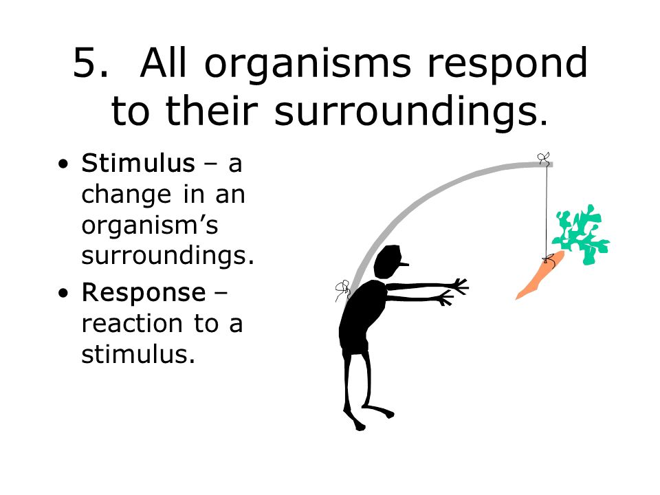 5. All organisms respond to their surroundings.