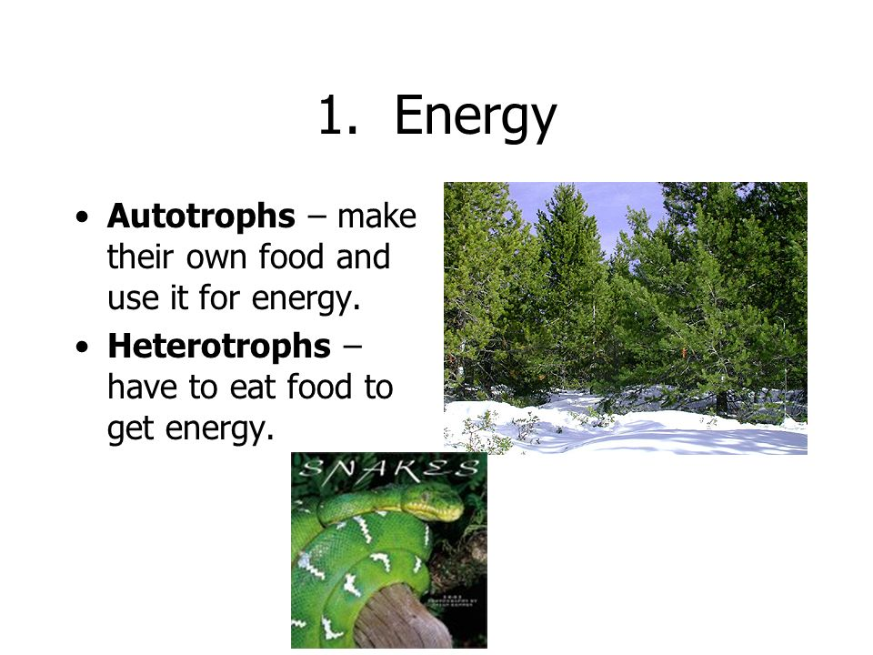 1. Energy Autotrophs – make their own food and use it for energy.