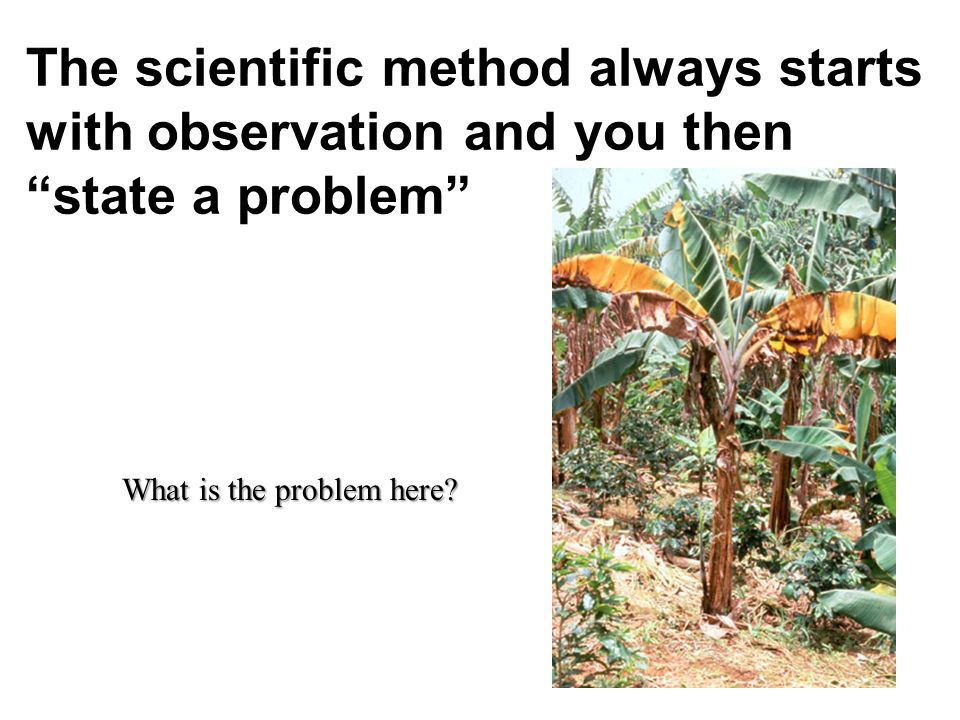The scientific method always starts with observation and you then state a problem