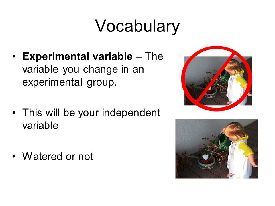 Vocabulary Experimental variable – The variable you change in an experimental group. This will be your independent variable.