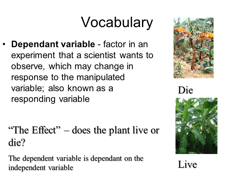 Vocabulary Die The Effect – does the plant live or die Live
