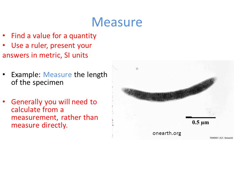 Measure Find a value for a quantity Use a ruler, present your
