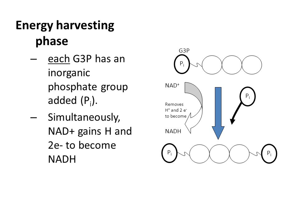 Energy harvesting phase