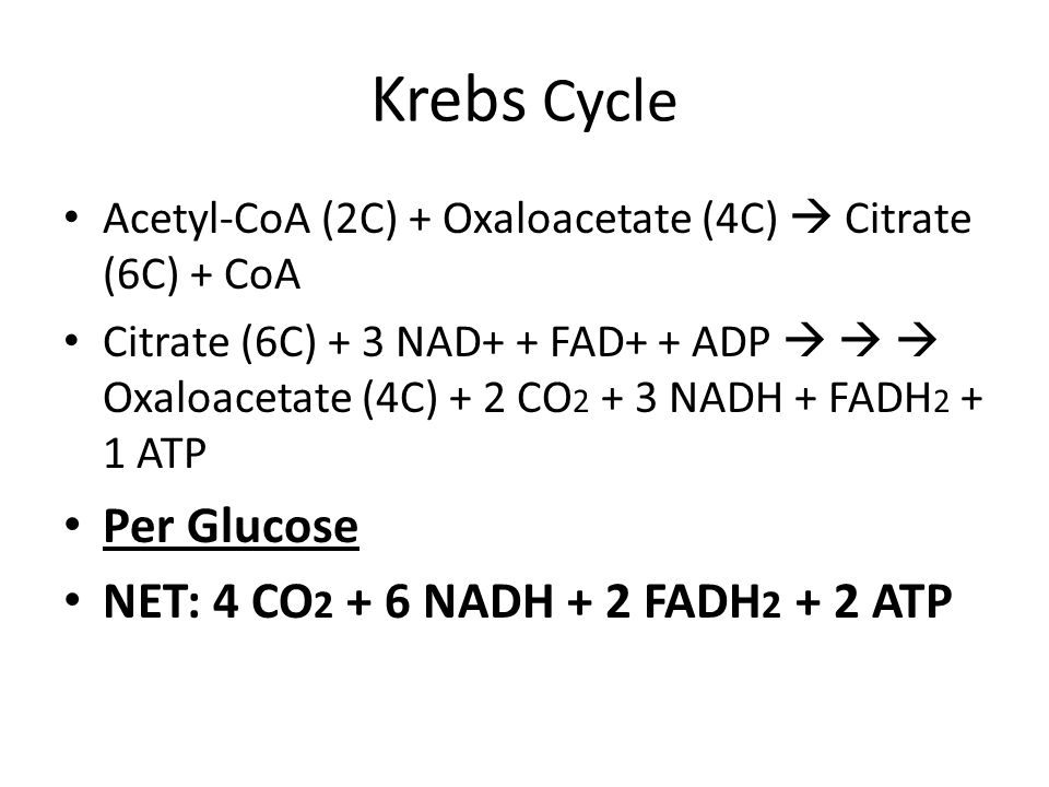 Krebs Cycle Per Glucose NET: 4 CO2 + 6 NADH + 2 FADH2 + 2 ATP