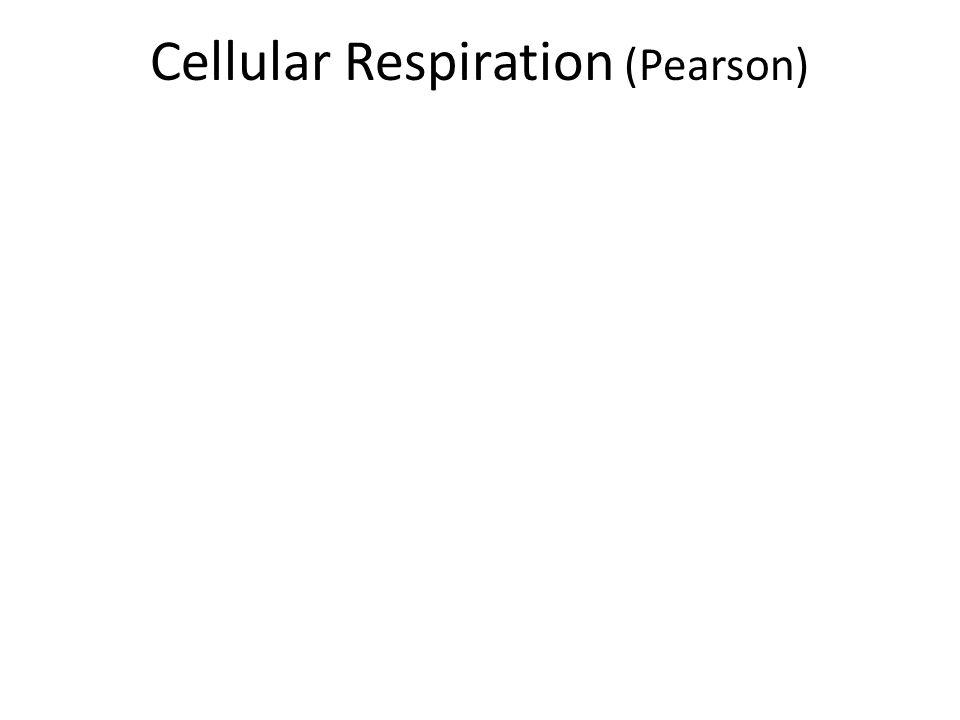 Cellular Respiration (Pearson)