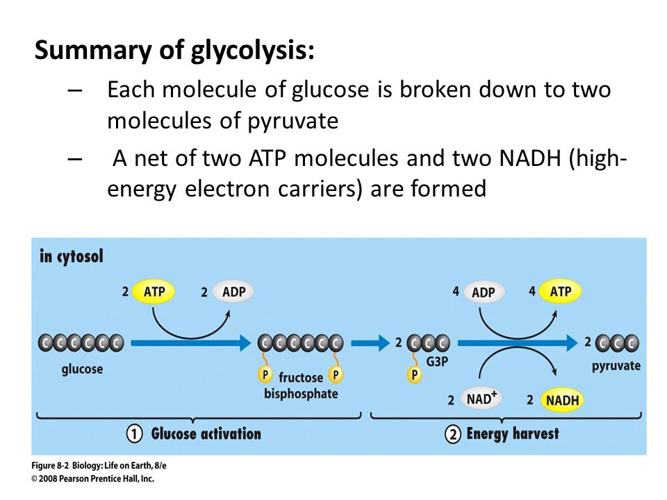 Summary of glycolysis: