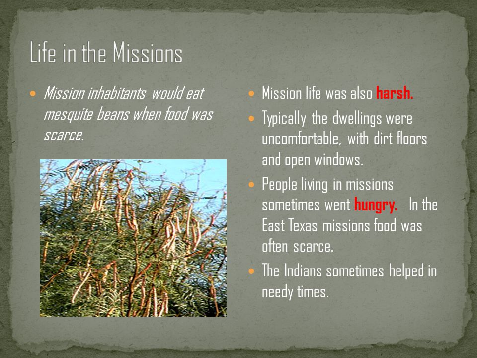Life in the Missions Mission inhabitants would eat mesquite beans when food was scarce. Mission life was also harsh.