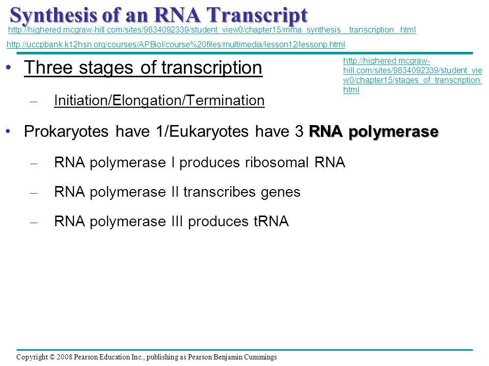Synthesis of an RNA Transcript